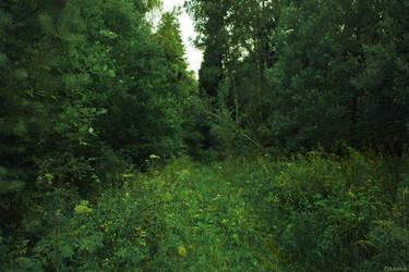 summer forest by VAMPIdor