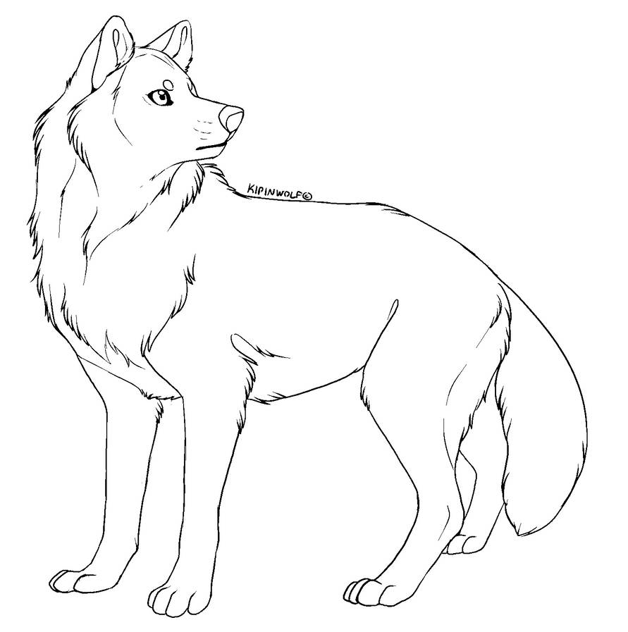 Free lineart - wolf by Kipine on DeviantArt