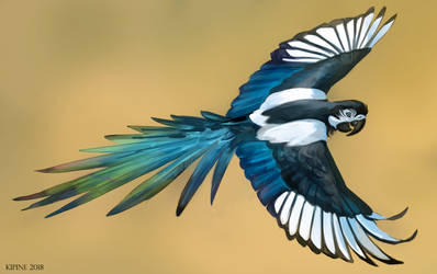 Magpie Macaw by Kipine