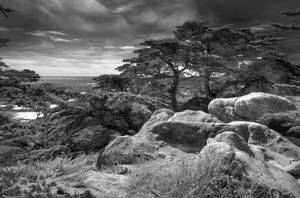 Point Lobos #5 by PaulWeber