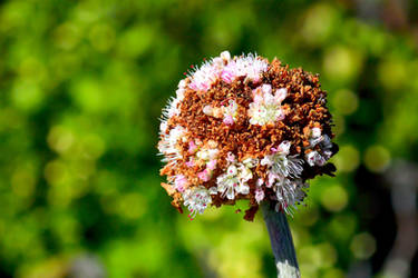 Aging bouquet by PaulWeber