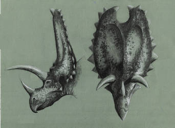 Ceratops by Marqui5