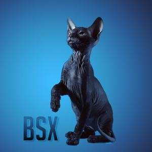 lblacksphynx's Profile Picture