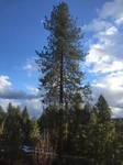 Big Tree by peril-clay