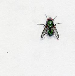 Fly by ModNight