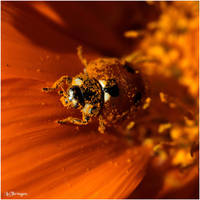 M2361 - Pollen. by Lothringen