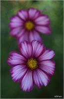 L1737 - Flowers of my garden. by Lothringen