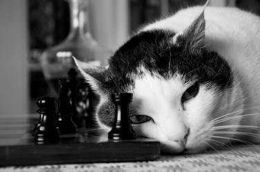 Cat and Chess 2 by AzeemElvehir