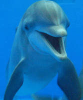 Dolphin Crop by ChicagoCetacean