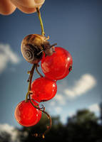 Snail And The Berrys by 666GirL666