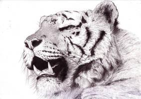 Portraits - Tiger by DanieleGrigo