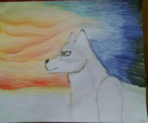 Wolf at Sunset by ZanderAWolf