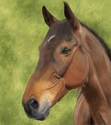 Digital Horse Painting #1 by Satrumm