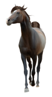 Horse Pre-Cut #5 by Satrumm