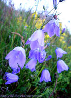 Harebell by Eagly92