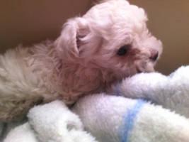 Fifi,Randy's baby by Mushy-Sugar-Chan