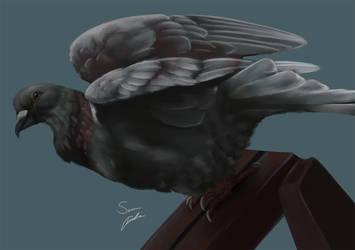 Pigeon Study by Legendary-Darkness