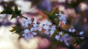 Blooming of Spring by LisaAnn1968