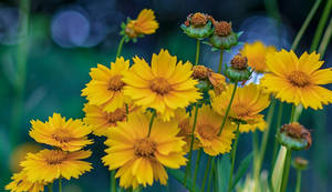 Joy of Yellow by LisaAnn1968