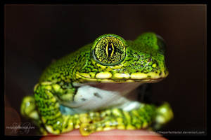 L vermiculatus sept 2007 by theperfectlestat