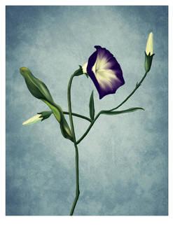 Flower - Blue Version by unikatdesign