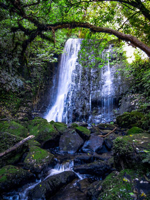 Waterfall in the Catlins by unikatdesign