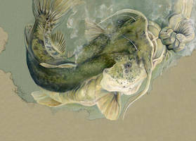 catfisting, version 2 by Cephalopodwaltz