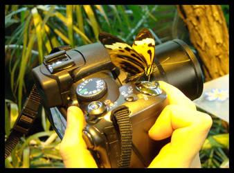 Photographing Butterflies by zdzichu