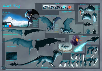 Black Wing Ref Sheet: old by Black-Wing24