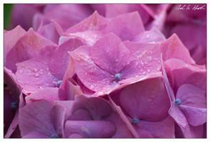 Rainy Day by Ito6