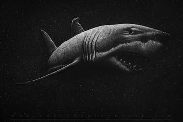 Shark In Space by CaseyNealArtwork