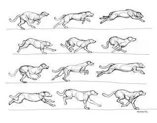 Greyhound running by RenegadeStudios