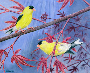 American Goldfinch by Hydrophis