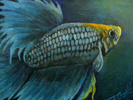 Blue Crowntail by greyviolett