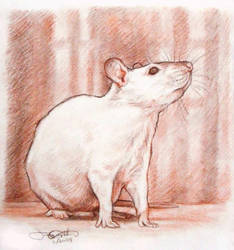 A Rat Portrait by greyviolett