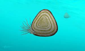 Soliclymenia paradoxa by mixtix-freeman