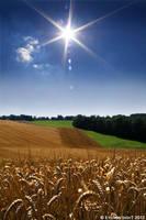 Fields of Sunshine by eyeronsight