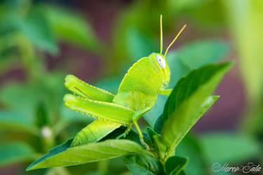 Greener than Green by pendrym