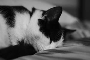 Sleepy Cat by thzinc