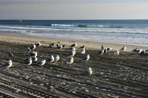 Gulls of Zuma by thzinc