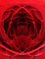 Inside a Rose by WiseWanderer