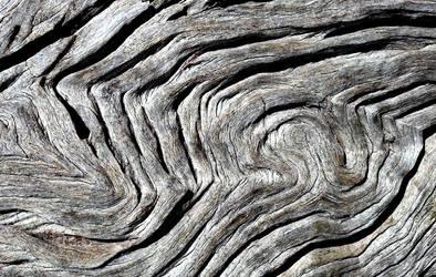 Fingerprint of a tree by WiseWanderer