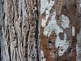 Wood by WiseWanderer