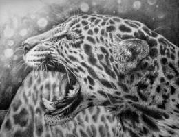 Leopard by RubyRyn