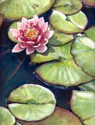 Water Lily by RubyRyn