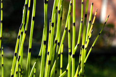 Bright bamboo by gillc