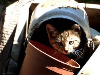 Kitty in the kettle by FreekNik