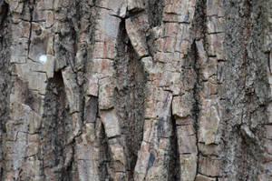 Maple Bark I by PC-STOCK