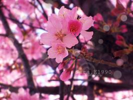 Miss Pink. by skykeys