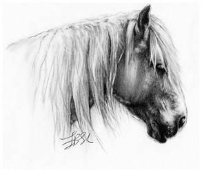 Horse by FinAngel